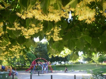 linden-tree-playground-1024x768